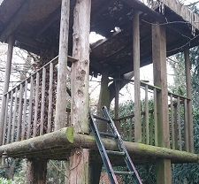 Wooden treehouse before renovation